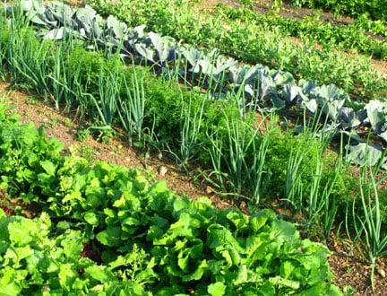 Fertilizer (fertiliser) crop technology