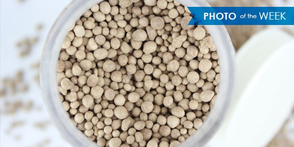 These synthetic gypsum pellets were agglomerated in FEECO's lab facility on a disc pelletizer.