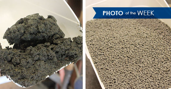 Raw vs. Granulated Cattle Manure