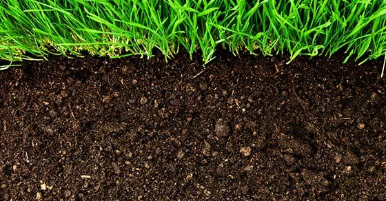 Biochar: A High-Performance Organic Fertilizer Created from Biomass