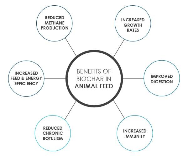 Benefits of Biochar in Animal Feed