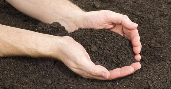 Biochar in Drought Resistance