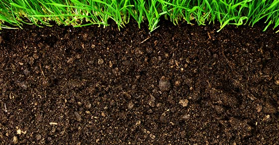 Soil Amendments and Conditioners Vital in Soil Restoration
